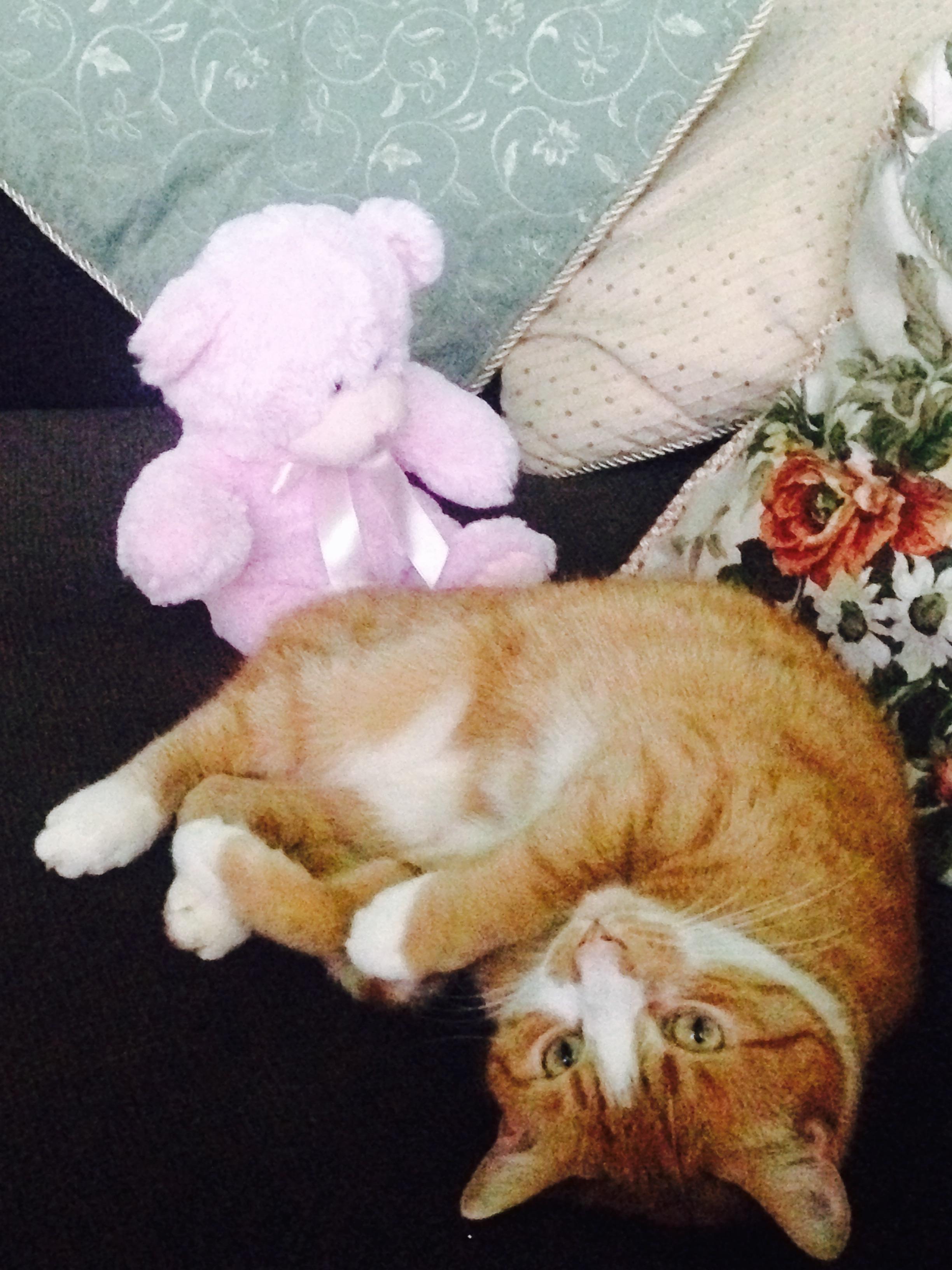 jones with toy